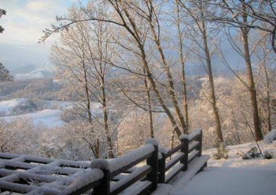 winter view garden
